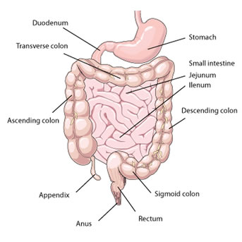 bowel-endometriosis-treatment
